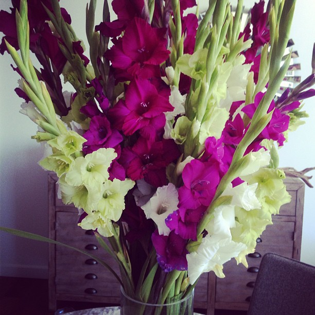 Flowers Always Bloom   Paige Davis blog